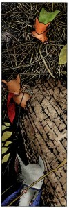 Mouseguard, David Peterson, Archaia Studios Press