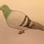 pigeon-Annie