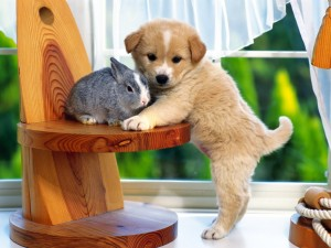 http://offleashk9training.com/dogtrainingblog/wp-content/uploads/2014/04/Sweet-puppy-with-bunny-puppies-14749075-1600-1200.jpg