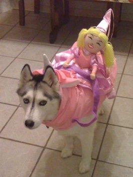 husky-unicorn-costume