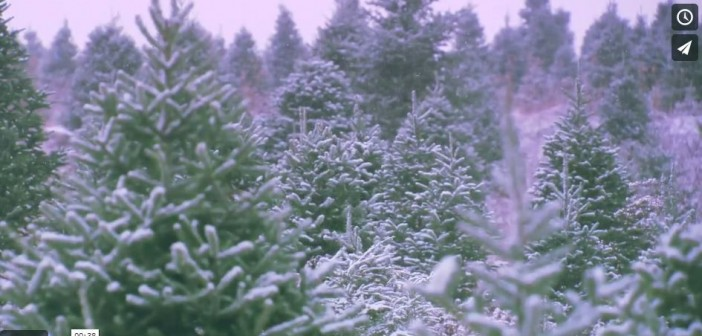 Treevenge, Screenshot