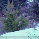 Treevenge, baby tree