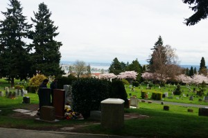 Cherry trees bloom in the distance at Lake View Cemetery, Seattle. The graves of Bruce and Brandon Lee are visible on the left. March 2015.