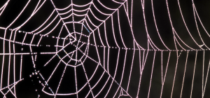My Worst Fears: Arachnophobia in Games