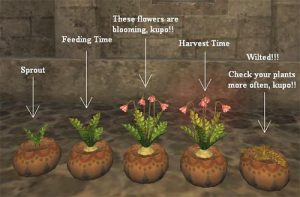 Gardening in Final Fantasy XI