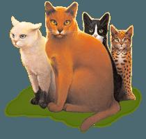 www.warriorcats.com