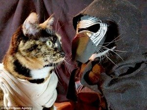 Cosplay cats by Nathan Smith via Caters News Agency