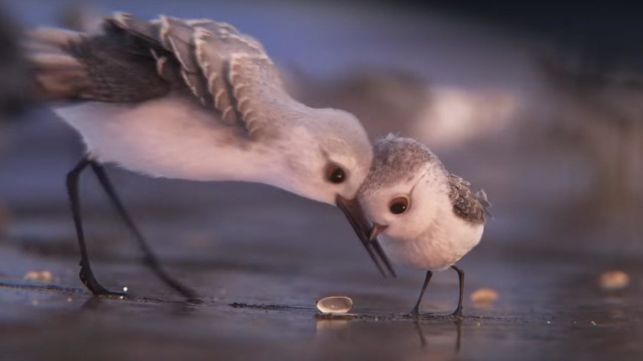 Oscar Animated Shorts: Birds, Booze, and Bands