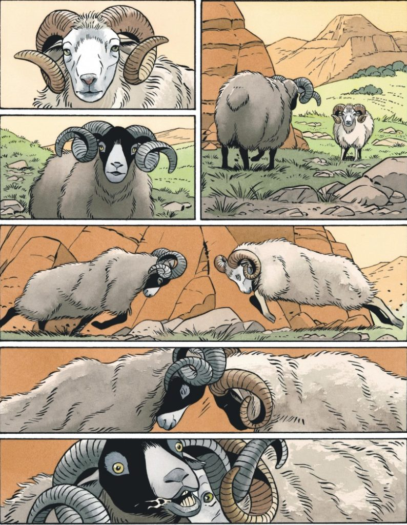 A Hell of an Innocent Page 6. Two rams attack each other. Written by Zidrou. Drawn by Philippe Berthet. Published by Dargaud (Belgium) and Europe Comics (English). 2015 (Belgium). 18 April, 2018 (English)