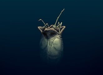 Alien 3 #1: Not Bad for an Unproduced Screenplay