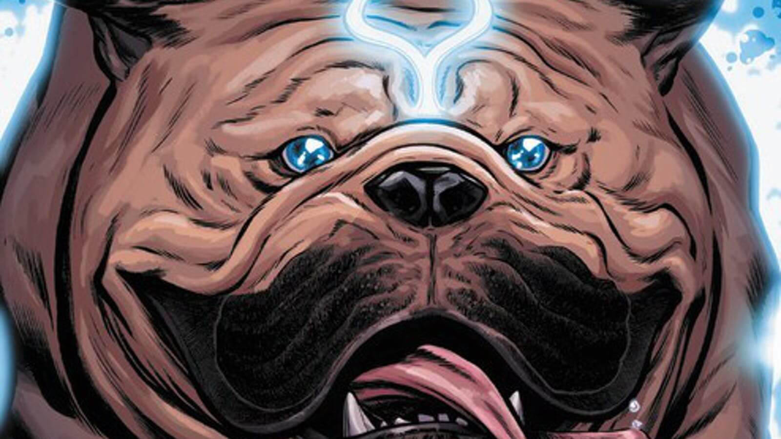 a giant bulldog runs forward, tongue lolling
